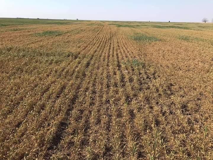 Венцислав Върбанов: Въпреки сушата няма опасения за зърнения баланс и цената на хляба
