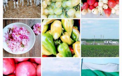 Браншови организации: Включването ни в подготовката на стратегическия план за земеделието е добър ход