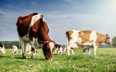 """АЗПБ с принос в решаване на казуса по мярка 14 """"Хуманно отношение към животните"""""""